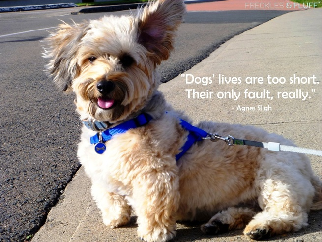 Dogs' Lives are Too Short. Their Only Fault, Really.