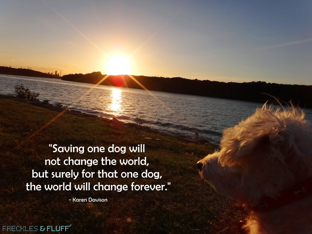 Saving one dog will not change the world, but surely for that one dog the world will change forever.